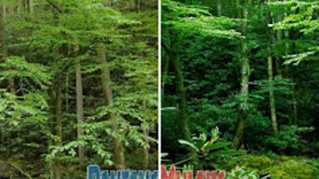 cara membuat efek hdr di photoshop